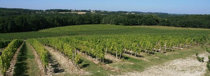 vignes-large