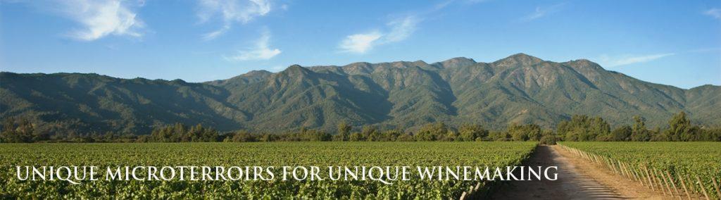 quinta wijngaard
